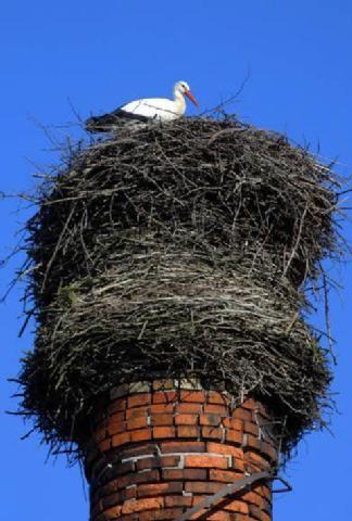 Schornstein-Nest