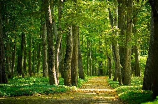 nature_article-biomasse_sf